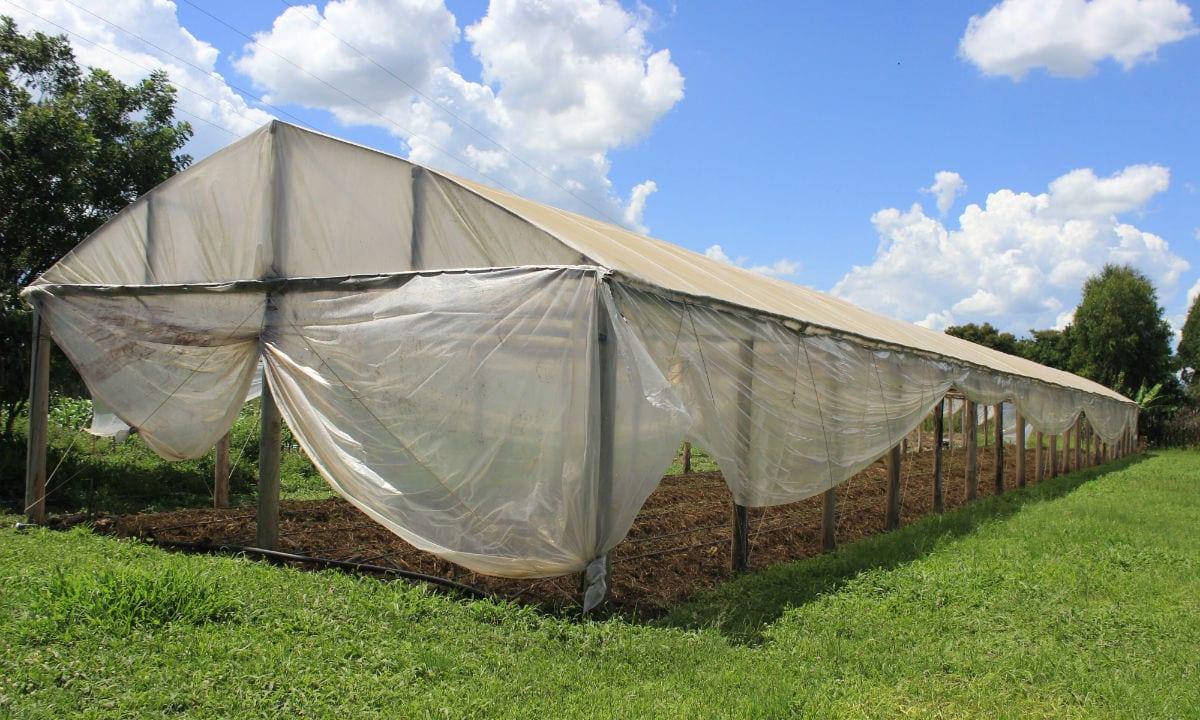 Assentamento do Paraná é referência na produção de orgânicos