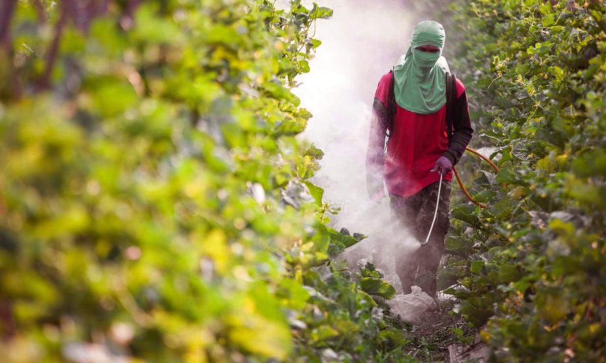A Anvisa alterou as regras de registro de agrotóxicos, o que mudou a rotulagem dos produtos e reduziu aqueles considerados extremamente tóxicos (Foto: Reprodução)