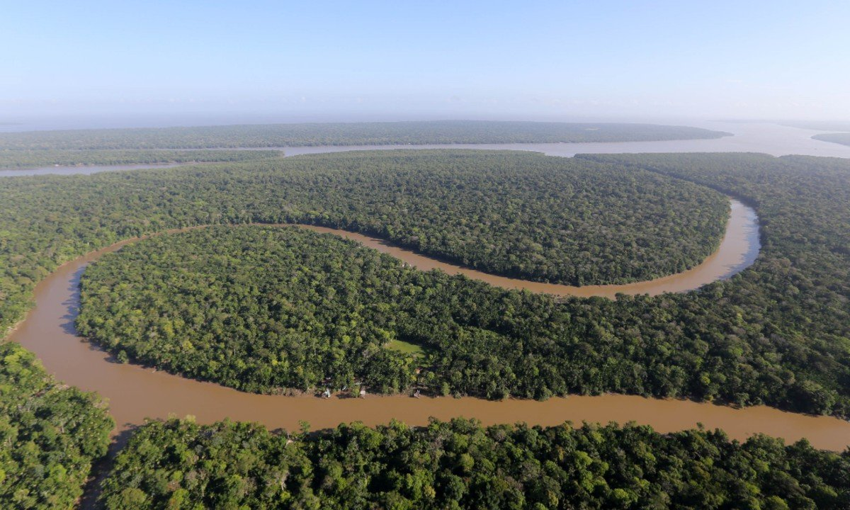 Floresta Amazônica (Foto: Sidney Oliveira/Agência Pará)
