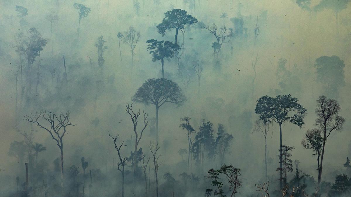 Foco de incêndio em Altamira, Pará. Foto: AFP PHOTO / GREENPEACE / VICTOR MORIYAMA