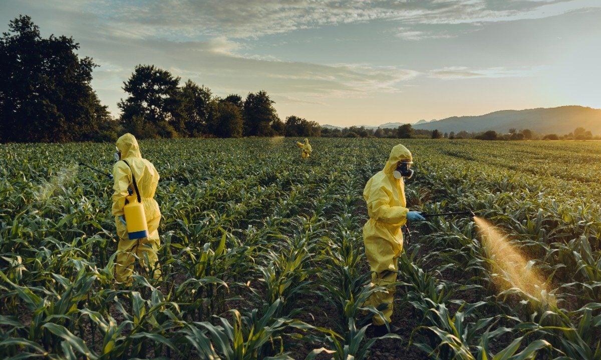 Recorde. O Brasil, maior consumidor de agrotóxicos do planeta, continua a liberar pesticidas. Em nove meses, foram quase 400 autorizações. Vem mais por aí... (Foto: Istockphoto)