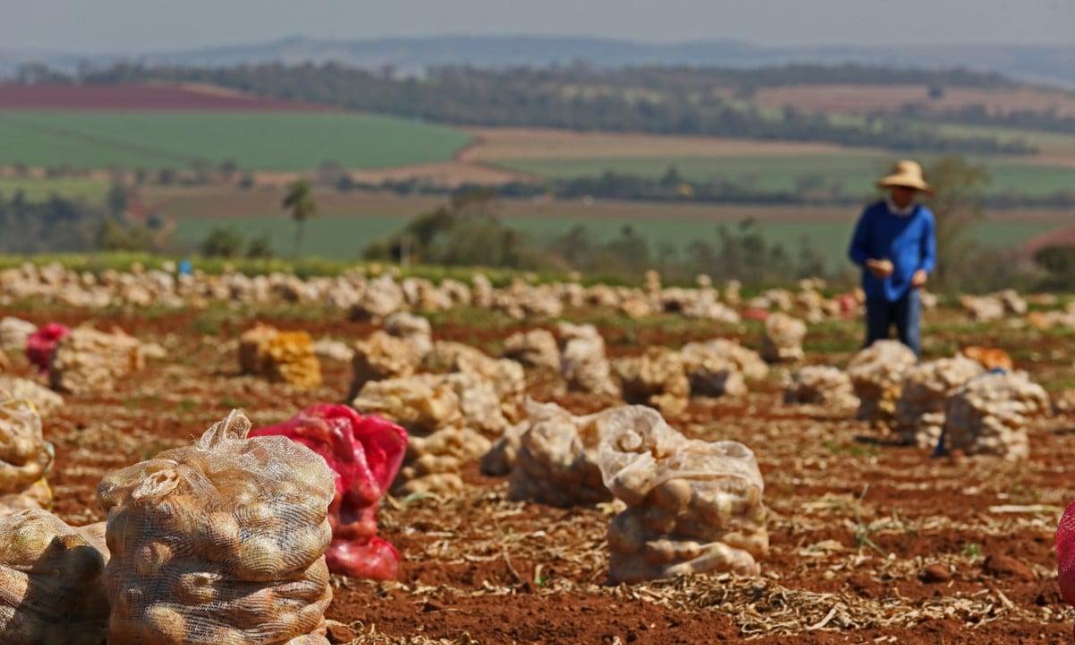 Encurralados. O pequeno agricultor perde renda e vira presa do grande. Foto Istockphoto