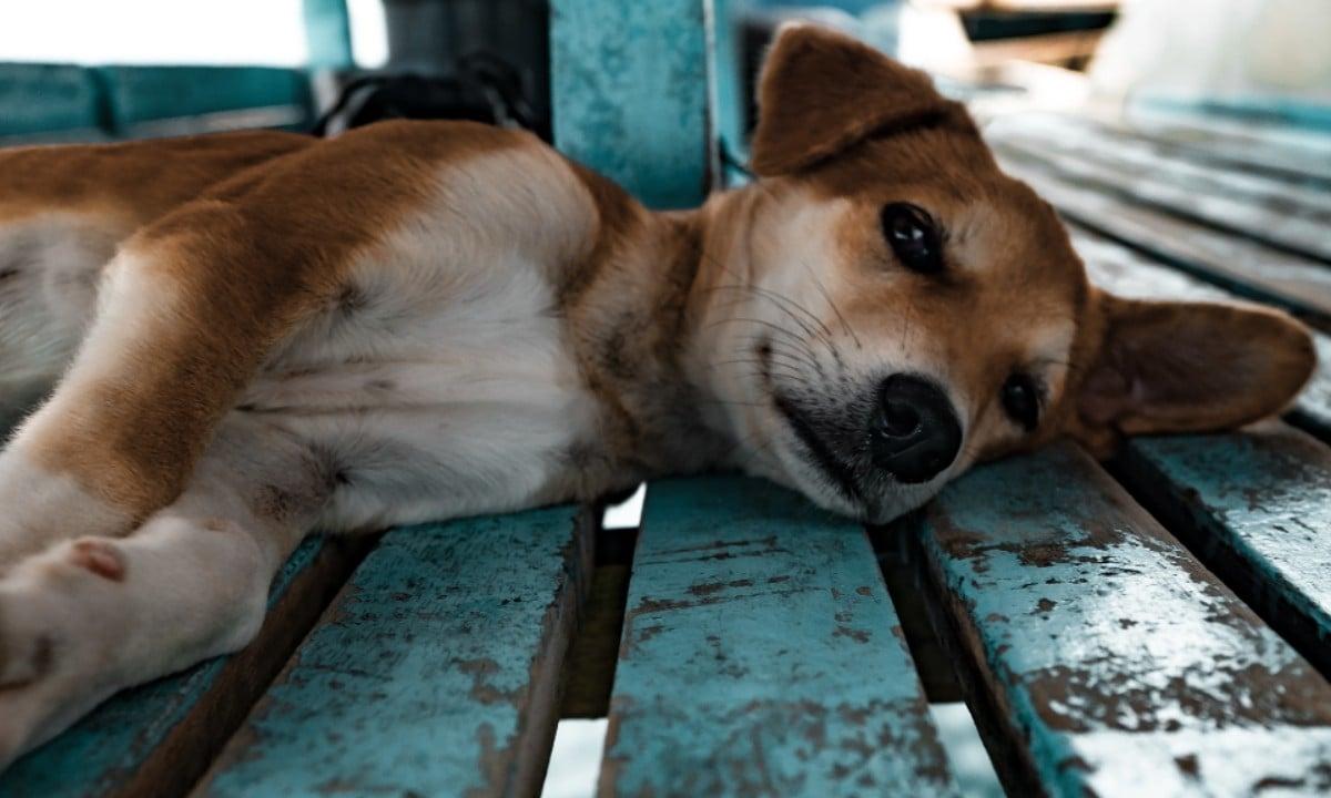 Senado aprova aumento de pena para agressores de cães e gatos.