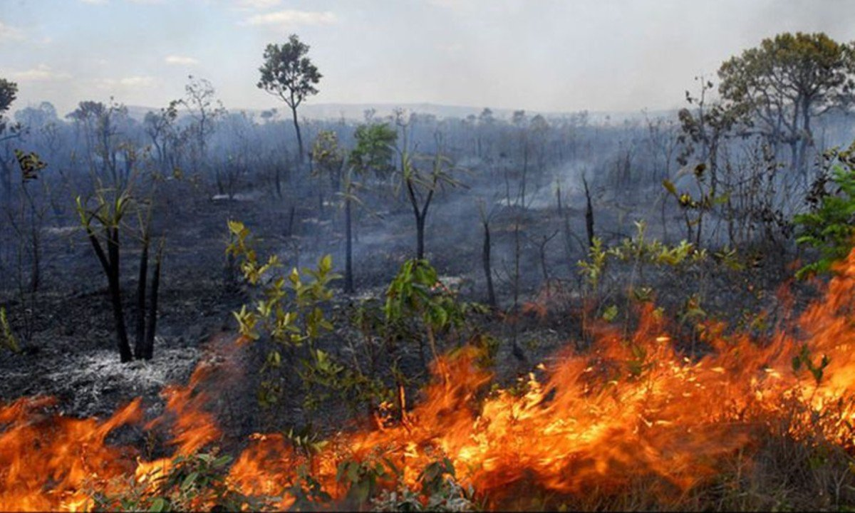 Governo exclui Inpe e dados do desmatamento serão divulgados pelo Ministério da Agricultura
